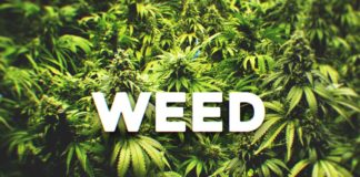 22 Quotes About Cannabis Every Cancer Patient Should See