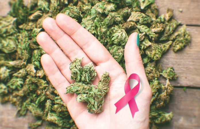 Can Cannabis Cure Cancer? What The Research Says?