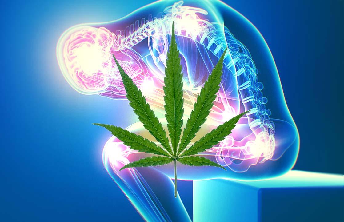 How Cannabis Treats Chronic Pain