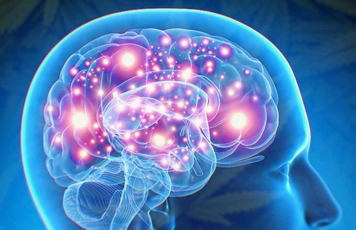 How Cannabis Treats Epilepsy