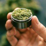 How Cannabis Treats Inflammation