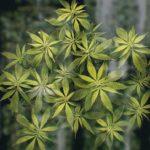 Musings of a Middle-Aged Marijuana Novice