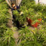 Nj Veterans Seek Medical Cannabis For PTSD