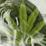 Tackling Chronic Pain With Cannabis