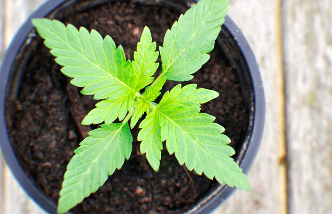 Where Can I Grow My Own Medical Marijuana?