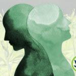 cbd and bipolar disorder