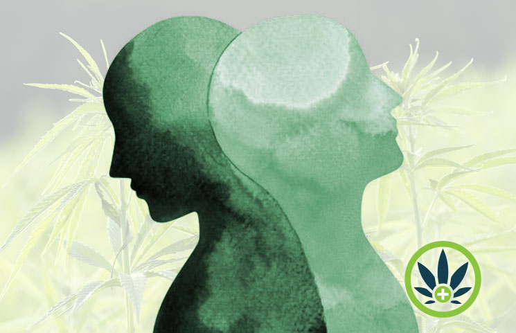 cbd and bipolar disorder