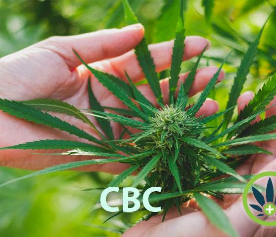 cannabichromene-cbc