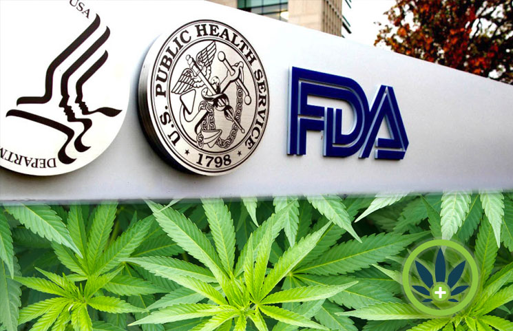 FDA CBD Regulations: A Look at the Food and Drug Administration on Cannabidiol