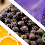 What are Terpenes? Ultimate Health Guide to Cannabis Terpene Oils