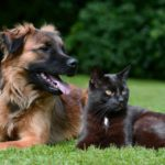 best cbd oil products for pets