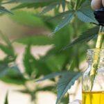 Cannabinoids-oil-cbd-cannabis