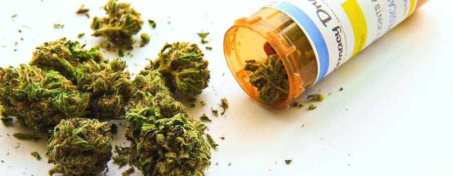 Medical Marijuana Could Be an Alternative to Opioids and Painkillers