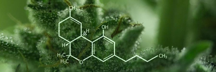 Benefits-of-CBD-Oil-for-Humans