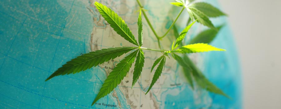 Which Countries Have Legalized Medical Marijuana?