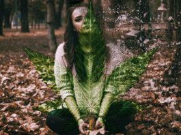 cannabis-anxiety-study