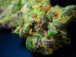 thc-thcp-cbd-cbdp-cannabis-cannabinoids